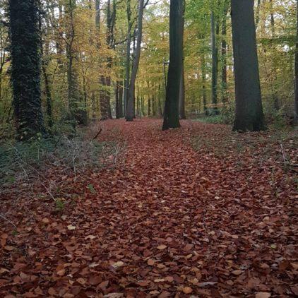 Waldbesitzer können Prämie beantragen