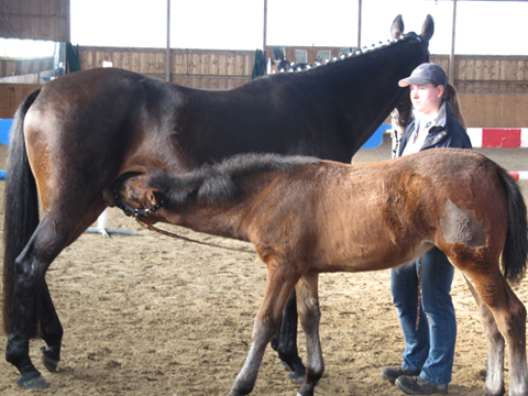 Gute Nachrichten für Pferde- und Geflügelzüchter